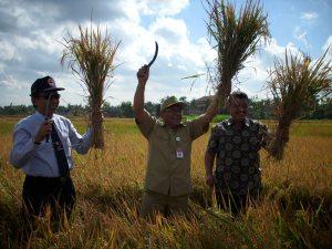 Kepala Dinas Pertanian Provinsi DIY Nanang Suwandi (kiri) dan Sekda Bantul Gendut Sudarto (tengah) panen padi simbolis di Bulak Manding Sabdodadi Bantul, Senin (22/6)